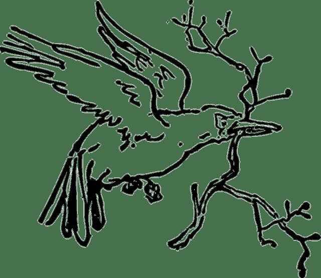 bird-36552_640